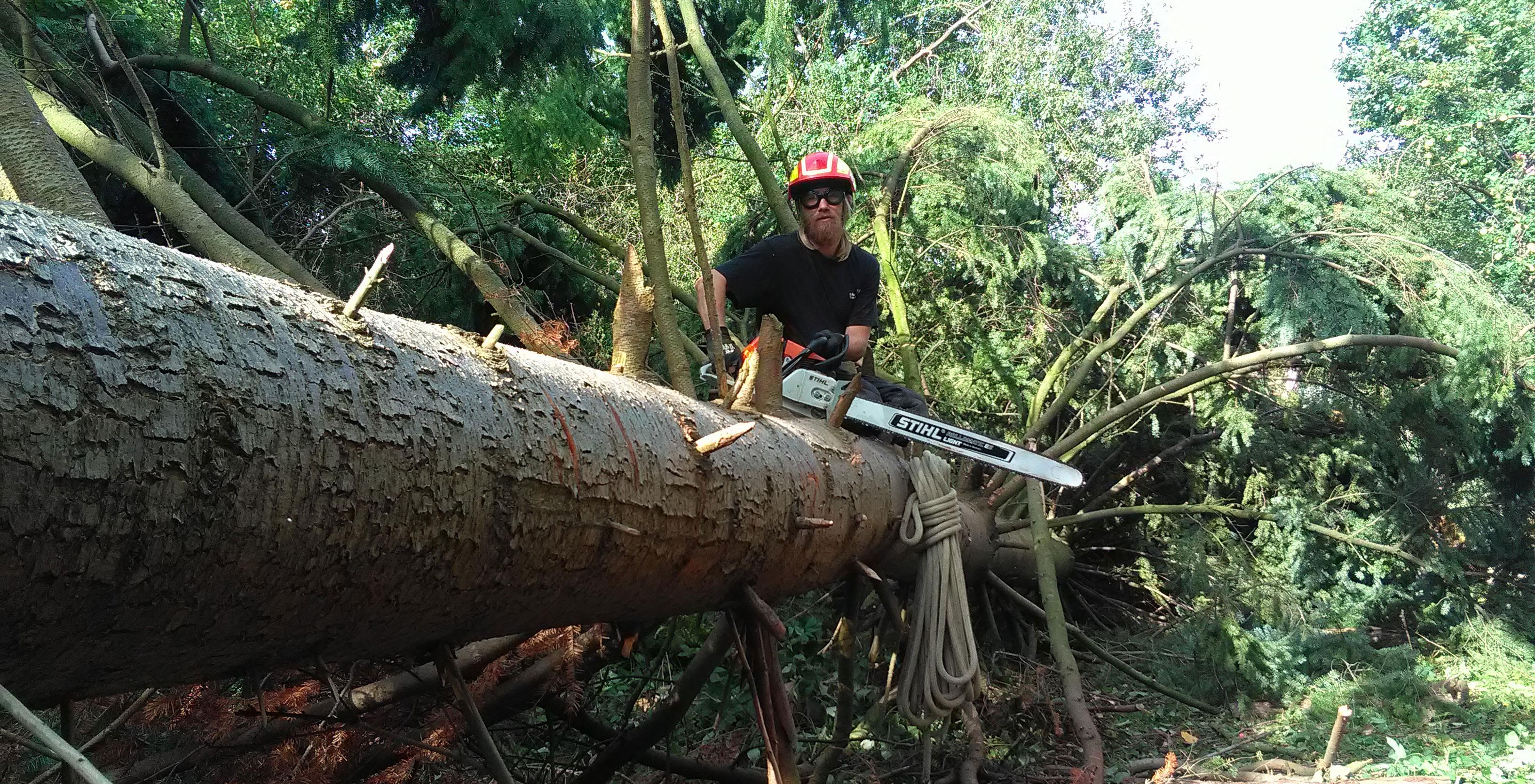 Ethan i gang med fældning af træ